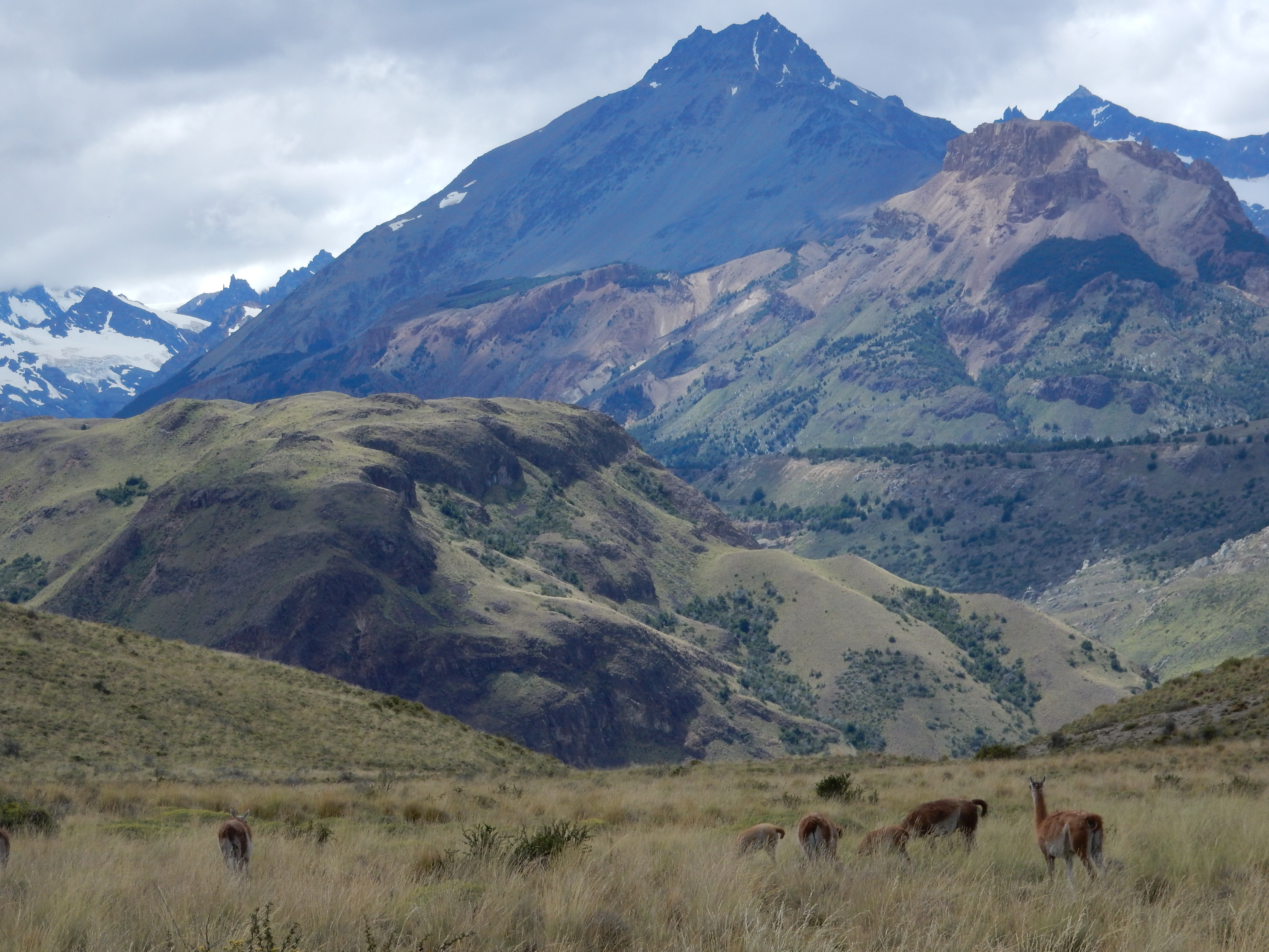 Chile Mountain and Llamas